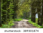 dirt road in spring forest | Shutterstock . vector #389301874