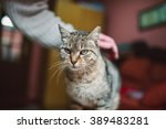 cat being scratched by a human... | Shutterstock . vector #389483281