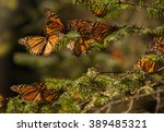 monarch butterfly migration in... | Shutterstock . vector #389485321