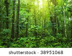 dense forest. tropical dense... | Shutterstock . vector #38951068
