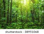 dense forest. tropical dense... | Shutterstock . vector #38951068