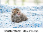 Stock photo beautiful tabby kitten sit and licking lip on bed 389548651