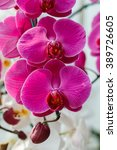 Small photo of Orchids, Vanda ,flowers, nature