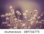 vintage soft light tone and... | Shutterstock . vector #389736775