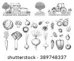 set of vintage retro farm logo. ... | Shutterstock .eps vector #389748337