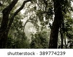 condition of the forest in the... | Shutterstock . vector #389774239