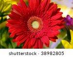 Beautiful red herbera bouquet - stock photo