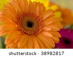Yellow herbera bouquet - stock photo