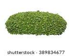 green bush isolated on white... | Shutterstock . vector #389834677