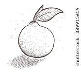 hand drawn vector fruit  | Shutterstock .eps vector #389915659