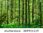lush green forest with dense... | Shutterstock . vector #389921119