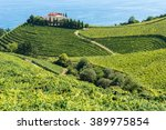 vineyards and wine cellar with... | Shutterstock . vector #389975854