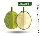 Breadfruit  Fruit Vector...