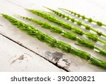 Horsetail Herbal Plants On Age...
