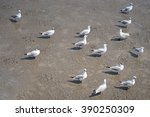 A Group Of Seagulls Bird On Mud
