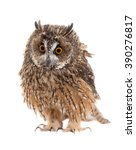Stock photo owl isolated on white background 390276817