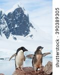 Small photo of Adelie penguin with chick standing on the rock, high rocky mountain covered by snow in background, Antarctic Peninsula