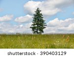One Tree In A Meadow