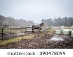 horse behind a fence on a muddy ... | Shutterstock . vector #390478099