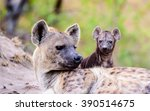 female hyena with her pup | Shutterstock . vector #390514675