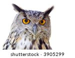 Stock photo big owl isolated 3905299