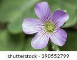 Wild Flowers Of Assam  Common...