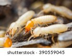 Close Up Termites Or White Ant...
