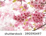 pink flowers blooming in park... | Shutterstock . vector #390590497