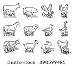set of butchery logo templates.   Shutterstock .eps vector #390599485