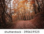 autumn forest. forest trail in... | Shutterstock . vector #390619525