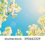 spring blossom   Shutterstock . vector #390662329