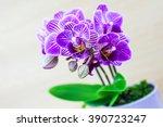 beautiful little blue purple... | Shutterstock . vector #390723247