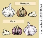 two types of garlic | Shutterstock .eps vector #390743269