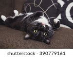 Stock photo black and white cat laying on his back on a couch 390779161