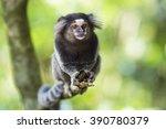 Sagui Monkey In The Wild In Ri...