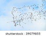 wild geese flying  tadorna...   Shutterstock . vector #39079855