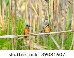 kingfishers  alcedo atthis  | Shutterstock . vector #39081607