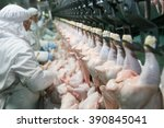 poultry processing plant | Shutterstock . vector #390845041