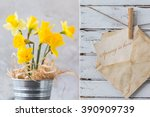 Yellow Daffodils In Silver Pot...