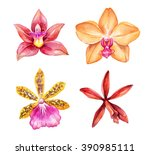 watercolor orchid flowers... | Shutterstock . vector #390985111