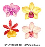 Watercolor Orchid Flowers...