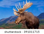 Male Moose Against Backdrop Of...