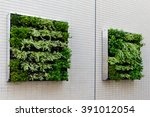 Green Plants On The Wall For...