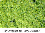 leaves of a tropical plant.... | Shutterstock . vector #391038064