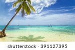 tropical beach with palm tree... | Shutterstock . vector #391127395