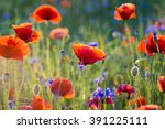 Wildflowers Poppies
