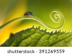 beautiful insects on a leaf... | Shutterstock . vector #391269559