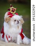 japanese chin dog in fancy dress | Shutterstock . vector #391322929