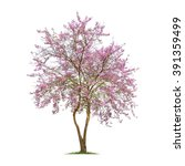 Isolated Lagerstroemia Loudoni...