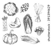 vector vegetable hand drawn... | Shutterstock .eps vector #391394629